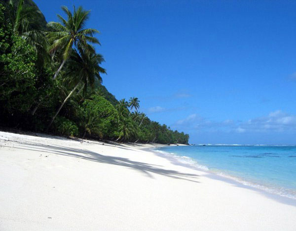 Beach - beautiful island and exotic palm.