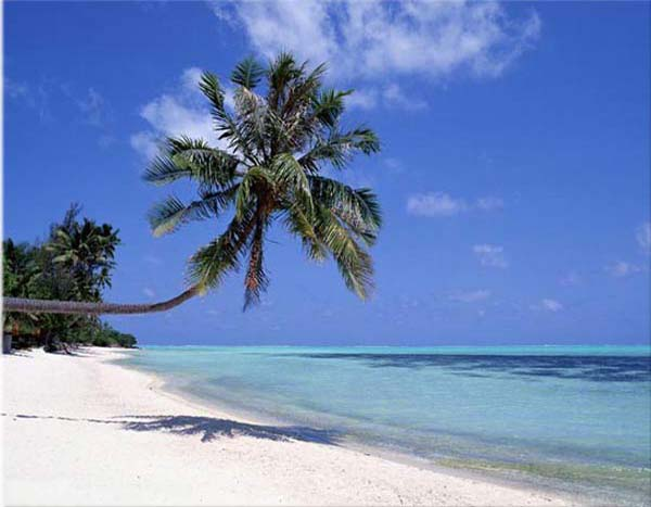 http://beautiful-island.50webs.com/beautiful-island/sunny-beach-palm.jpg